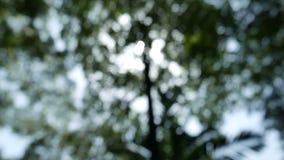 美好的太阳亮光通过吹在风树绿色留下被弄脏的bokeh自然背景 影视素材