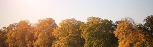 美好的套树上面 免版税库存照片