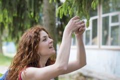 美好的女孩接触在云杉分支的绿色年轻针  免版税库存图片