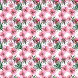 美好的嫩柔和的老练美妙的可爱的逗人喜爱的与绿色l的春天花卉草本植物的米黄粉状桃红色牡丹 皇族释放例证