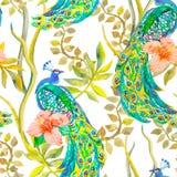 美好的孔雀样式 向量 孔雀和植物,热带花,木槿 免版税库存照片