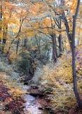 美好的季节性颜色的秋天森林地与一条岩石小河 库存照片