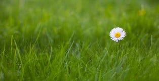 美好的宽银幕自然夏天背景 免版税库存图片