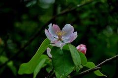 美好的小白色和桃红色花关闭 免版税图库摄影