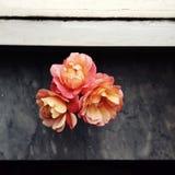 美好的小的束在灰色marmble的庭院玫瑰与从窗口的光,顶视图 年的居住的珊瑚颜色2019年 库存图片
