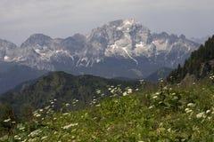 美好的山景 免版税库存图片