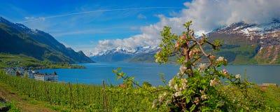 美好的峡湾hardangerfjord hordaland横向挪威地区 库存照片