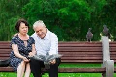 美好的年长夫妇坐长凳 免版税图库摄影