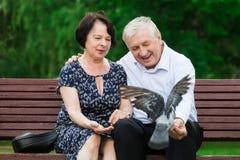 美好的年长夫妇坐长凳 图库摄影