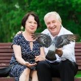 美好的年长夫妇坐长凳 免版税库存照片