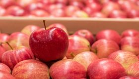美好的开胃果子后面研了用在卡片的红色苹果 免版税库存照片