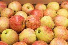 美好的开胃果子背景用在纸板的苹果 免版税库存照片