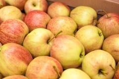 美好的开胃果子背景用在纸板的苹果 免版税图库摄影