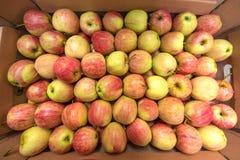 美好的开胃果子背景用在cardboar的苹果 免版税库存照片