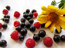 美好的开胃背景-一朵明亮的黄色洋姜花在莓和blackcurran的莓果中说谎 免版税库存图片
