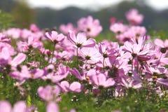 美好的开花日花粉红色 免版税库存照片