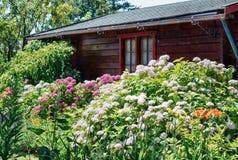 美好的开花的八仙花属和othe包围的庭院棚子 免版税库存照片