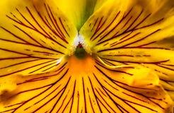 美好的开花的绽放在生动的阳光下 免版税图库摄影
