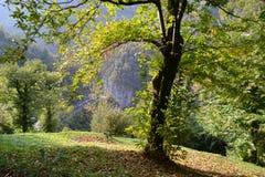 美好的弯曲的秋天montains风景在一好日子 免版税库存图片