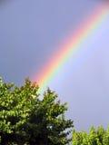 美好的彩虹和树背景 库存照片