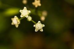美好的微小的shar形状的花摘要背景bokeh 库存照片