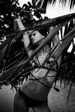 美好的性感的俏丽的深色的妇女夏天热带棕榈树p 库存图片