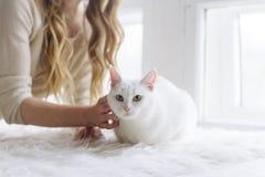美好的性感的白肤金发的开会在与猫一起的窗口里 库存图片