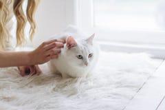 美好的性感的白肤金发的开会在与猫一起的窗口里 免版税图库摄影