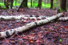 美好的意想不到的秋天风景 免版税库存照片