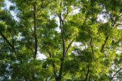 美好的抽象绿色留下背景的选择聚焦用途 免版税库存图片