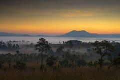 美好的新观点桐树萨朗Luang,泰国 免版税库存图片