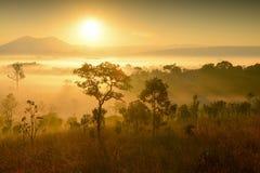 美好的新观点桐树萨朗Luang,泰国 免版税图库摄影