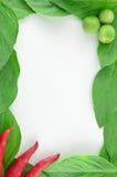 美好的新鲜蔬菜框架 库存照片