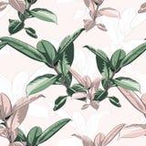 美好的无缝的传染媒介花卉样式,春天与热带榕属,密林叶子的夏天背景 库存例证