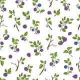 美好的无缝的样式用自然新鲜的蓝莓 在白色背景的手拉的剪影元素 库存照片