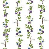 美好的无缝的样式用自然新鲜的蓝莓 在白色背景的手拉的剪影元素 免版税库存图片