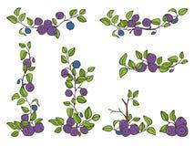 美好的无缝的样式用自然新鲜的蓝莓 在白色背景的手拉的剪影元素 免版税图库摄影