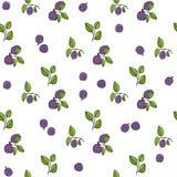 美好的无缝的样式用自然新鲜的蓝莓 免版税图库摄影