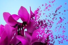 美好的无缝的花卉样式,春天与热带花,棕榈叶,密林叶子,木槿, pa鸟的夏天背景  库存图片