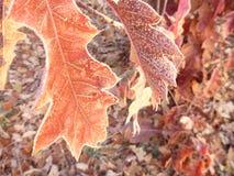 美好的日出在一个冷颤的11月早晨 免版税库存照片