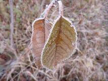 美好的日出在一个冷颤的11月早晨 库存照片