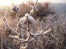 美好的日出在一个冷颤的11月早晨 图库摄影