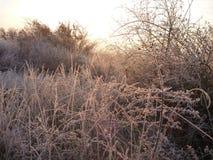 美好的日出在一个冷颤的11月早晨 免版税图库摄影