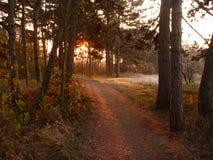 美好的日出在一个冷颤的11月早晨 免版税库存图片