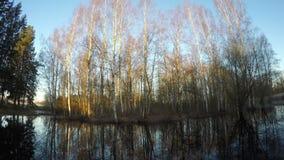 美好的日出在有池塘的早期的春天,时间间隔4K 影视素材