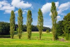美好的日好的小牧场 免版税库存图片