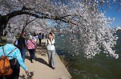 美好的日春天 库存图片