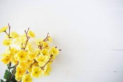 美好的日本樱花背景 库存图片