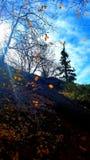 美好的日秋天 库存图片