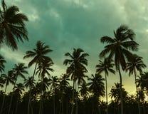 美好的日落、棕榈树和天蓝色的蓝绿色 免版税库存图片